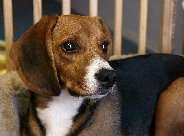 Породы собак фото   HouseDogRu